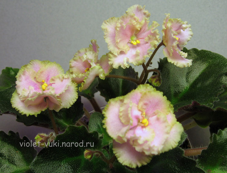 Цветок листья с зеленой каймой