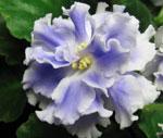 Каталог цветов в питере